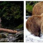 Canada fauna
