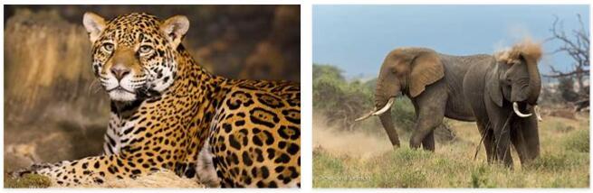 Kenya Animals