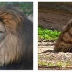 Libya Animals