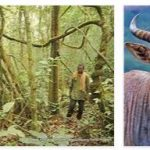 Dja Animal Reserve (World Heritage)